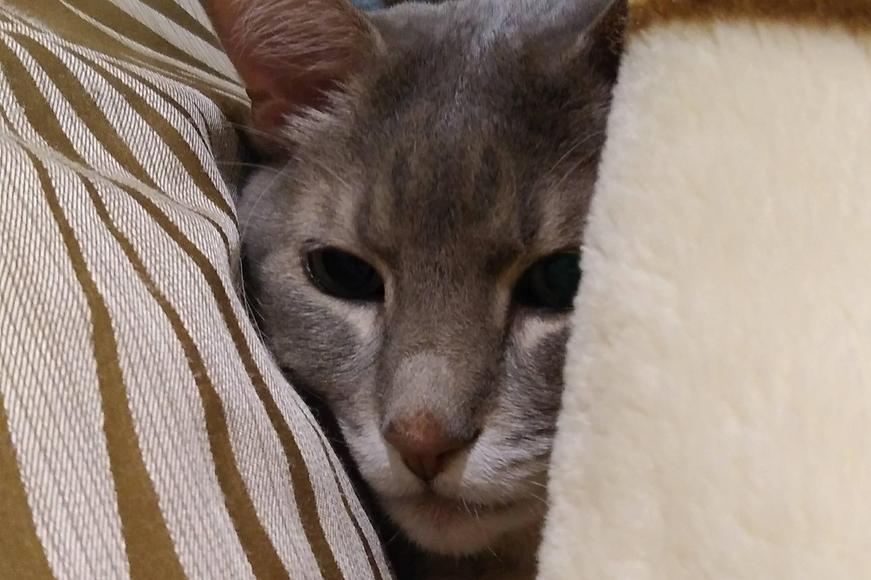 我が家の猫 | 毛布が暖かい