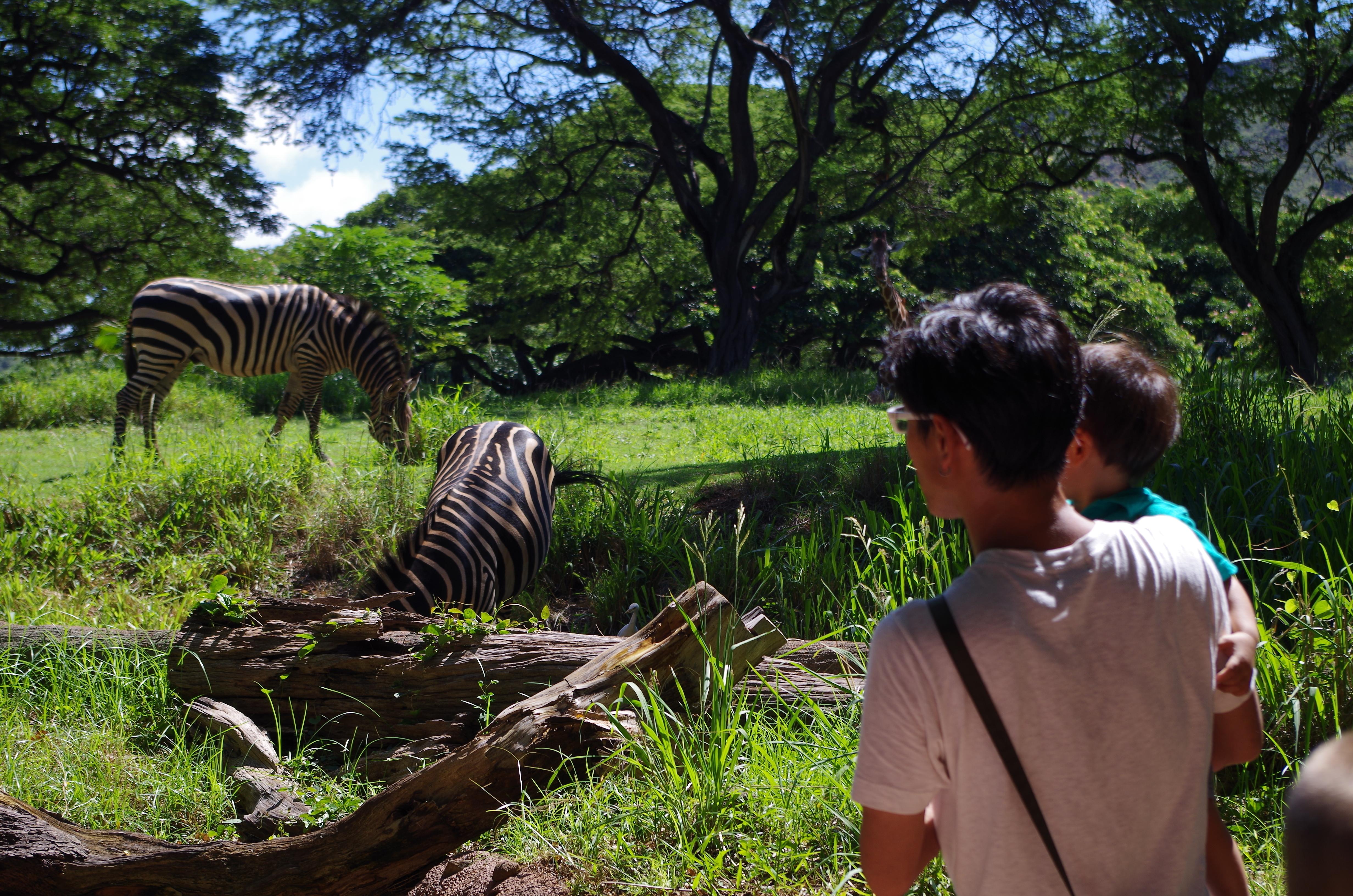 ホノルル動物園は遊具もあって子連れで1日遊べるオススメスポット|子連れハワイブログ