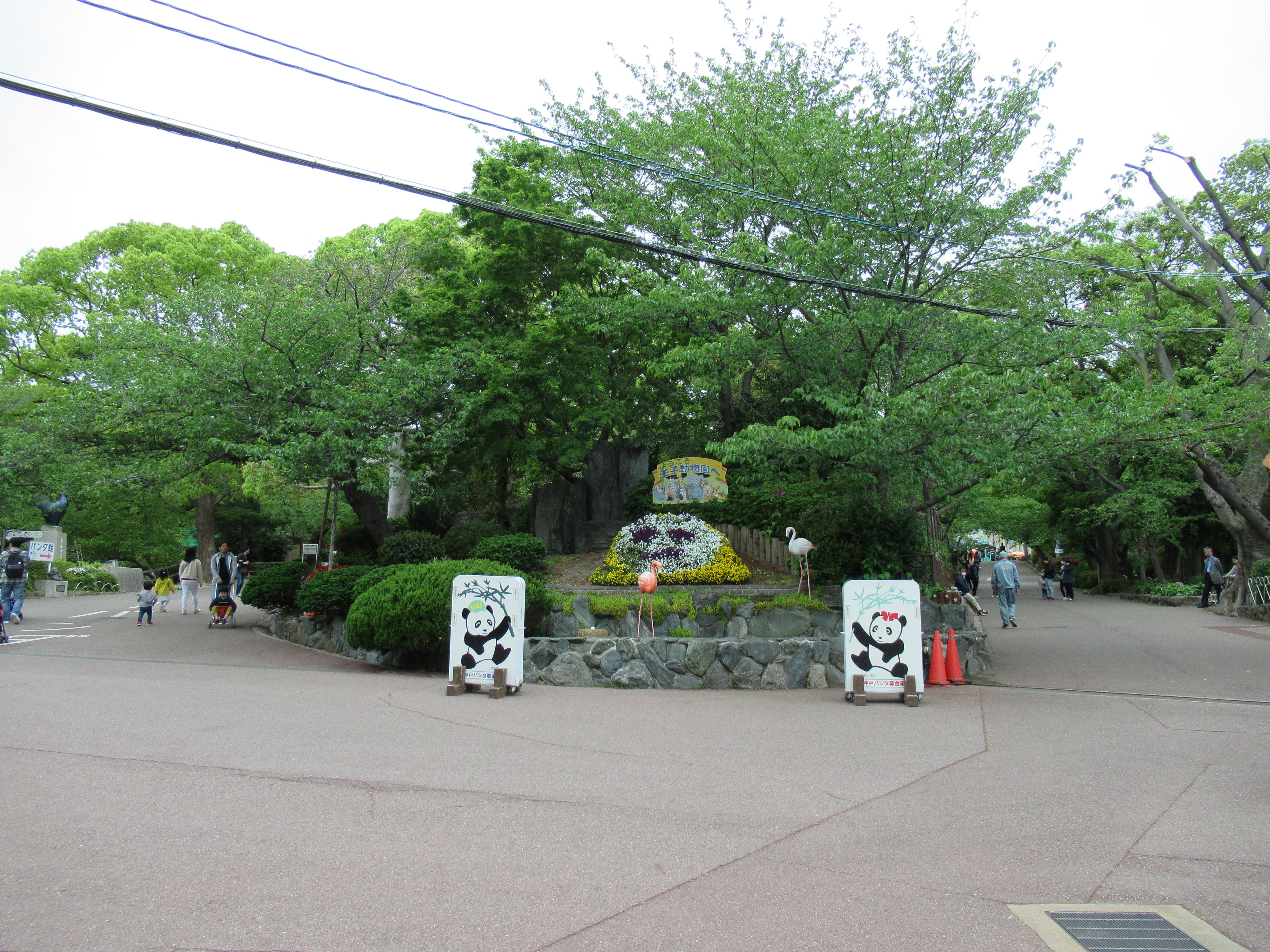 神戸王子動物園|GWの混雑状況レポ