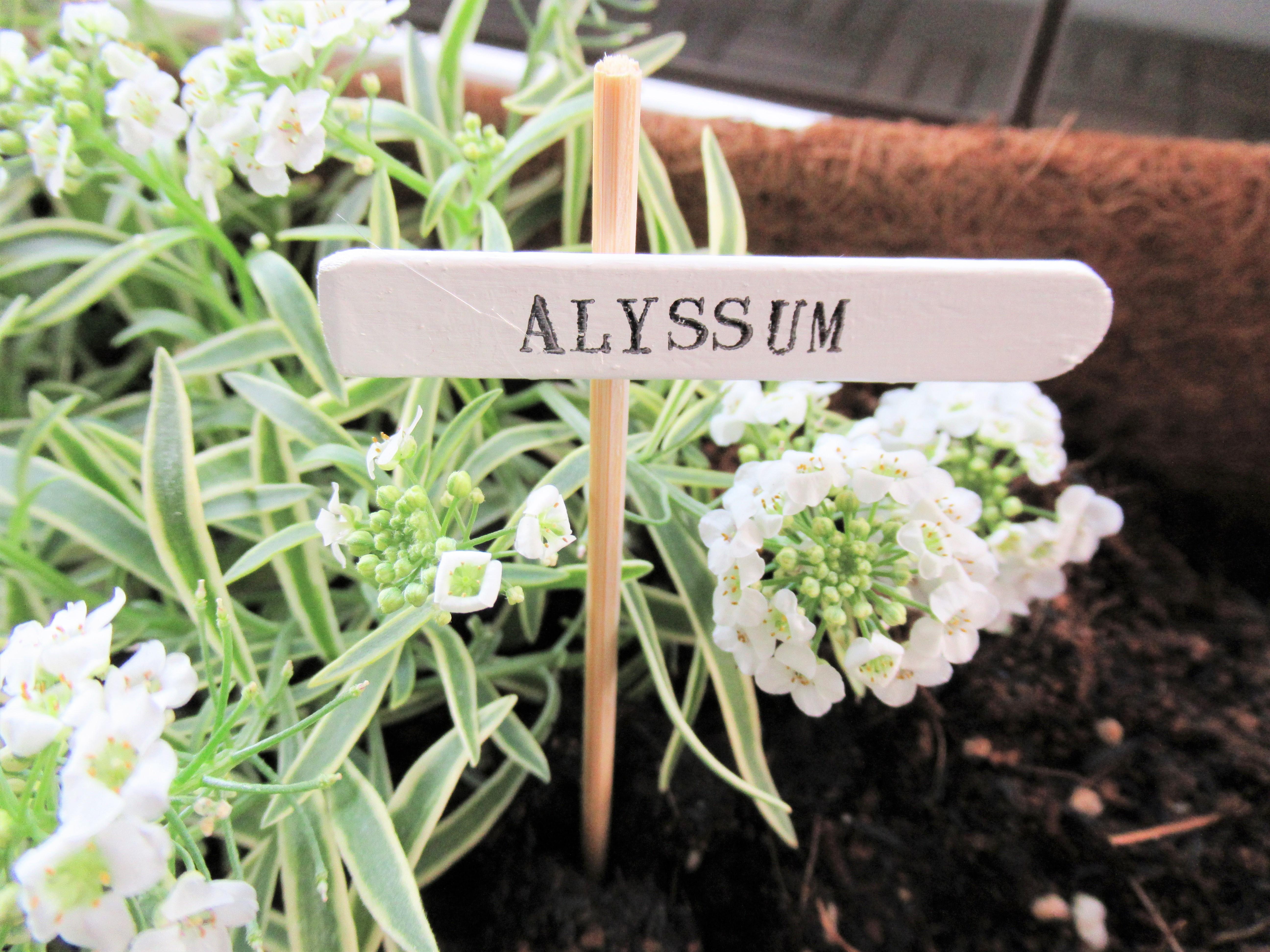 【ガーデニング】鉢植えのネームラベルを家にあるもので作る方法!アイデアでおしゃれ感アップ