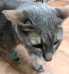 猫 糖尿病 症状 投薬 インシュリン 闘病記