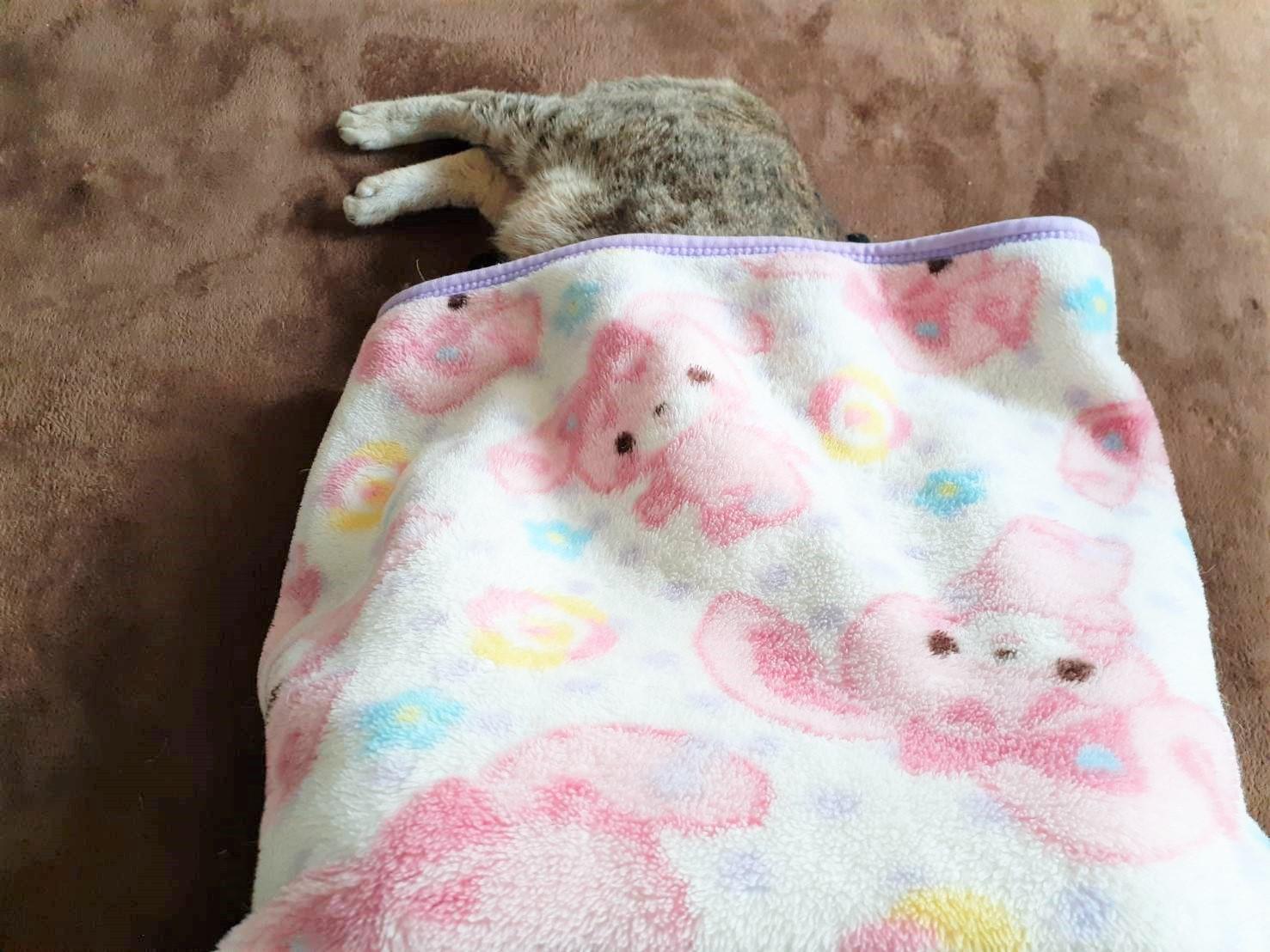 股から猫が生えてます