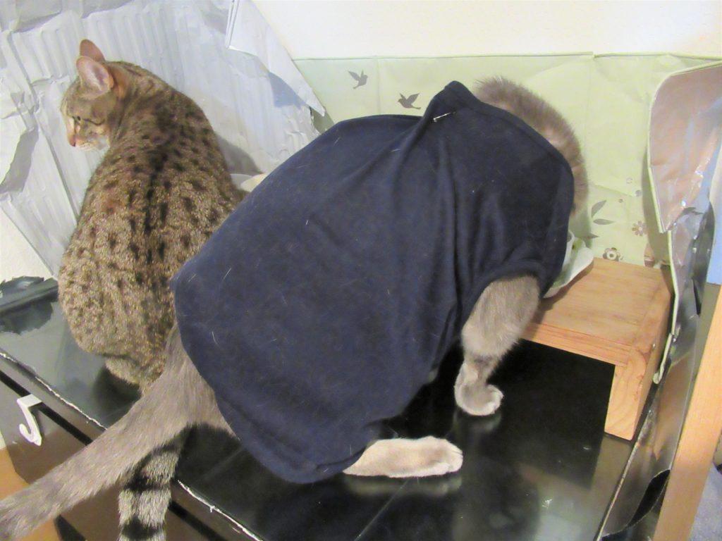 猫 糖尿病 リブレ 血糖値 計測